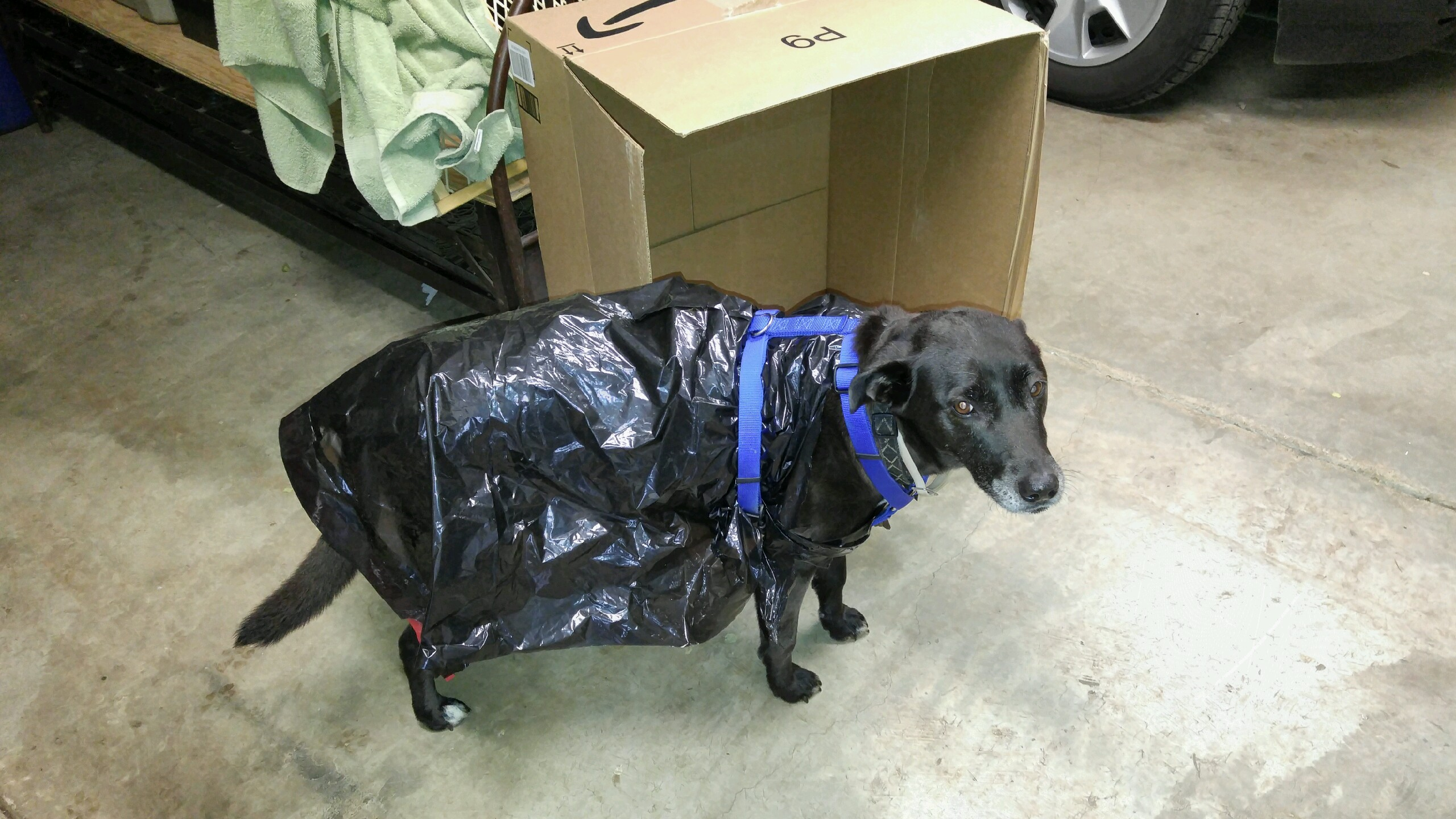 She was not thrilled about the raincoat.
